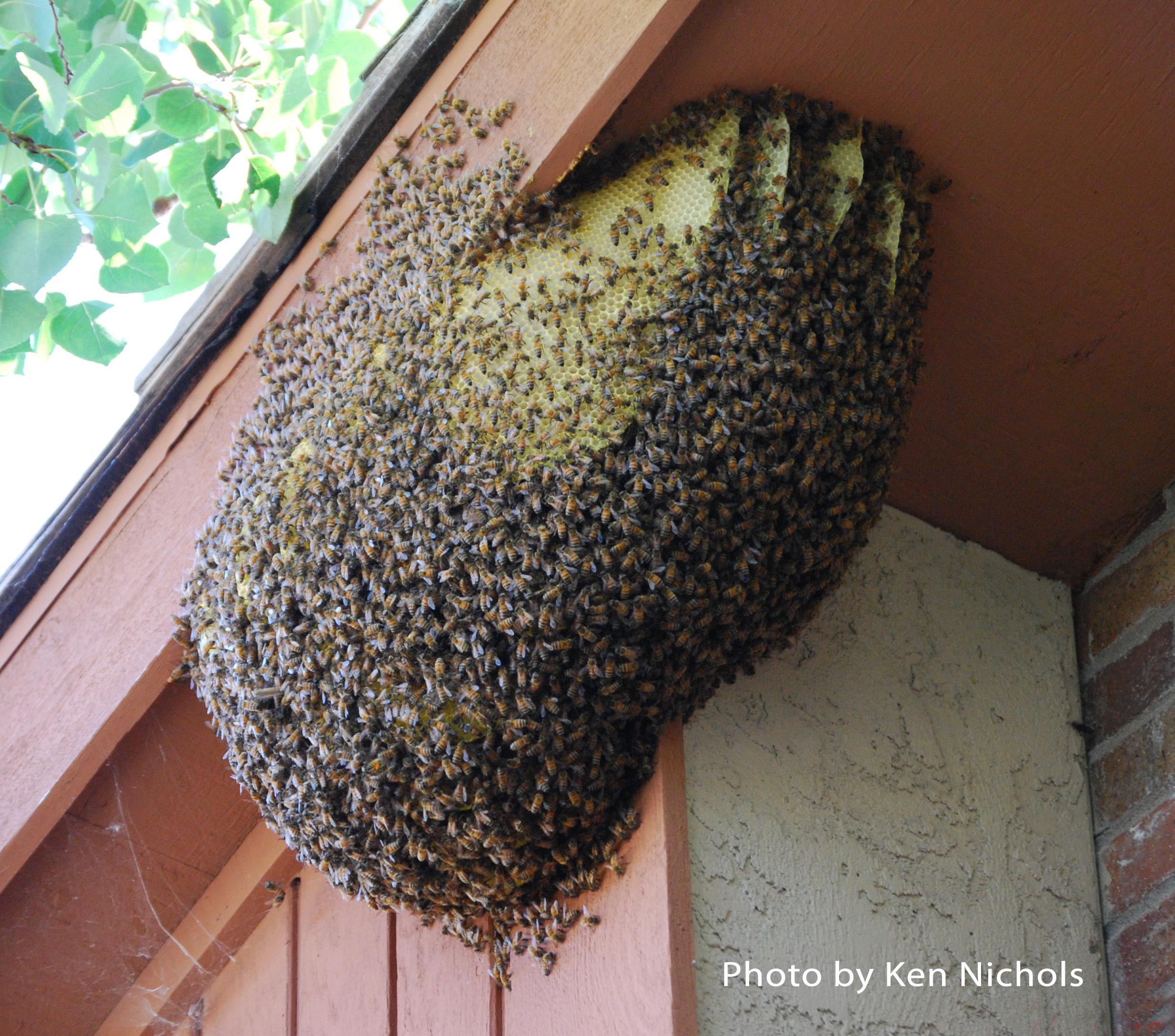 Black and yellow wasp bees vs wasps vs yellow